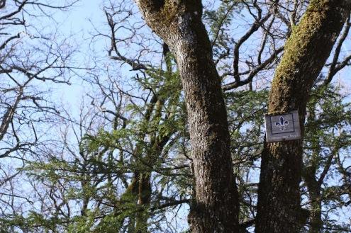 Таблички на деревьях не даются сбиться с монаршего пути /// Old tree signs help keeping the royal track