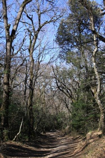 Манящая чаща леса Сент-Бом /// Beckoning woods of Sainte-Baume